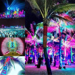 phish, phish riviera maya, barcelo phish, show show art, kuroda phish lights, meghan oona clifford, party animal art